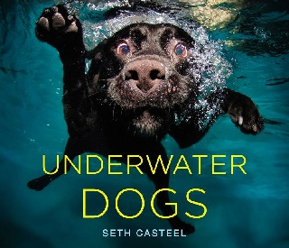 Pet Photographer Releases New Book and Makes a Splash