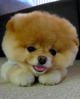 True Identify of Owner of World's Cutest Dog Revealed