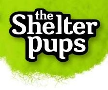 Stuffed Pups Launches and Helps Animals in Need