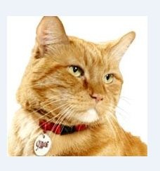 Morris the Cat Election Campaign Announced by 9Lives