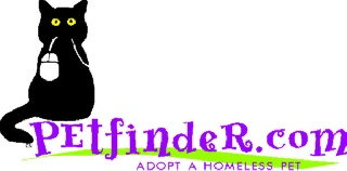PetFinder Tells All…Best Pet Friendly Airlines