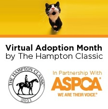 Pet Adoption Now Online Via Virtual Celebration