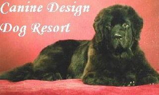 Dogs in Danville Get Five Star Treatment at Canine Resort