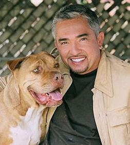 Cesar Millan Show Being Shopped To United States Networks