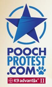 Pooch Protest Begins Today