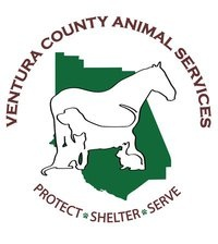 Celebrities Team Up with Ventura Country Animal Services in Camarillo