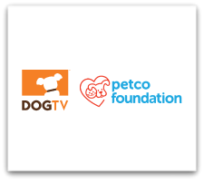 DOGTV is vying for Finalist Spot in the 2019 Innovation Showdown